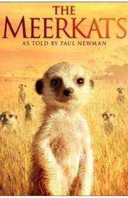 The Meerkats 2008 Full HD izle