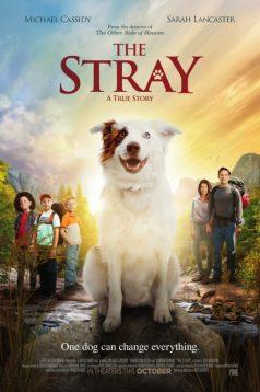 The Stray izle Altyazılı 1080p